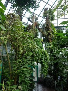 FOTKA - Bot.zahrada-americké tropy