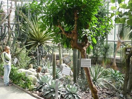 FOTKA - Big cacti