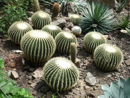 FOTKA - Velké kaktusy.