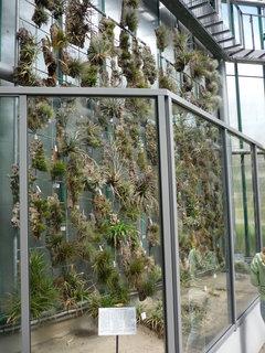 FOTKA - Kaktusy..