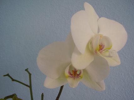 FOTKA - orchidej..