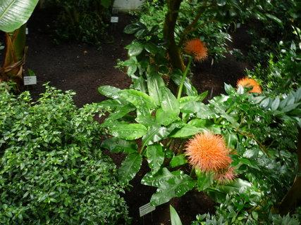 FOTKA - Flowery selection..