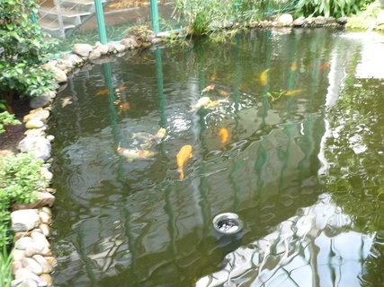 FOTKA - Bot.zahrada-akvárium
