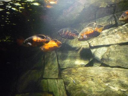 FOTKA - Akvárium