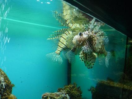 FOTKA - Bot.zahrada-akvárium.