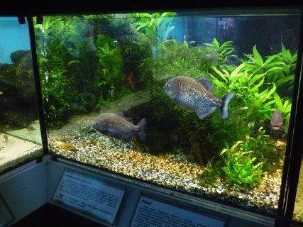 FOTKA - Bot.zahrada-akvárium..