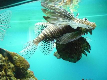 FOTKA - Ryby-akvárium
