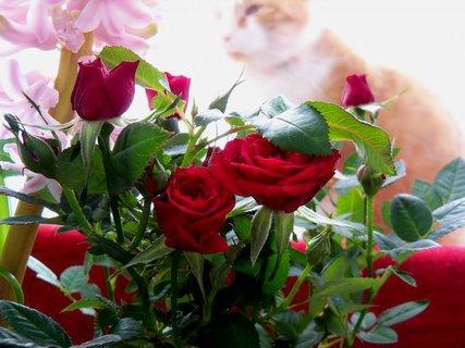 FOTKA - Mini růžičky na okně