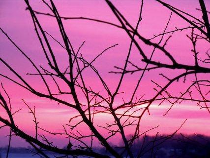FOTKA - Lednové svítání