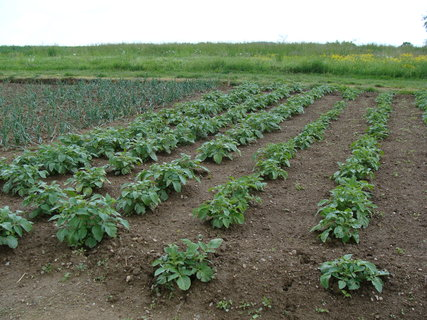 FOTKA - snaha o úrodu