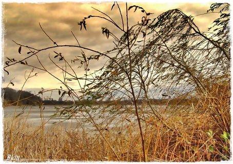 FOTKA - nad rybníkem 2