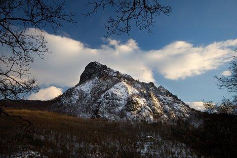 FOTKA - Bořeň zimní