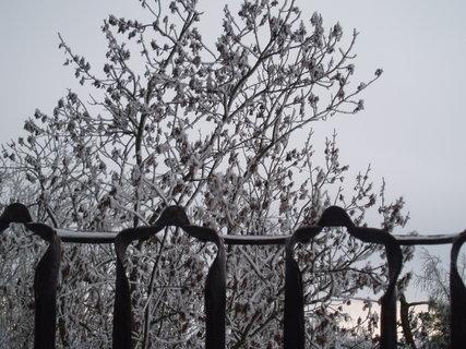 FOTKA - kouzlo zimy ..