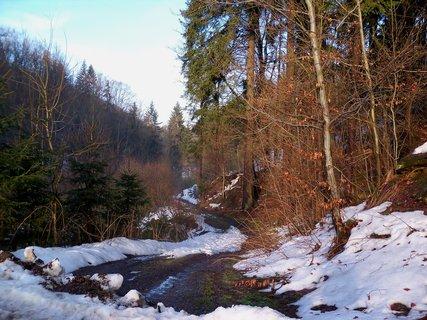 FOTKA - Procházka lednovým lesem