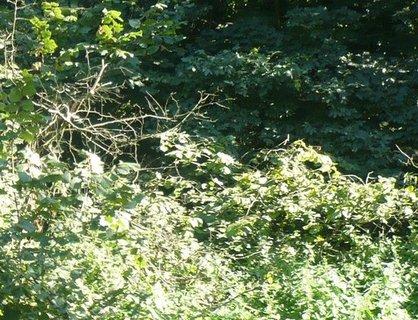 FOTKA - příroda kolem hradu Helfštýn