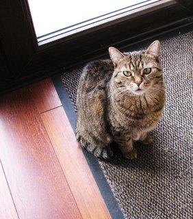 FOTKA - Mourovatá kočička