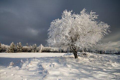 FOTKA - Zima na Lesné