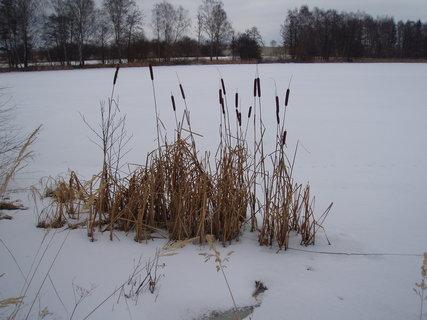 FOTKA - doutníky u rybníka