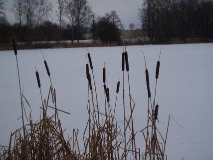 FOTKA - doutníky u rybníka ...