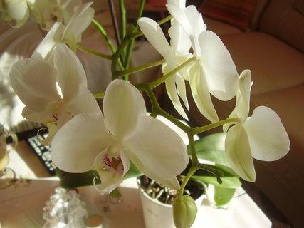 FOTKA - orchidej.....