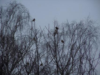 FOTKA - Ptáčci