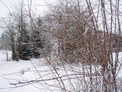 FOTKA - v zimě ..