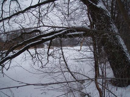 FOTKA - v zimě ...