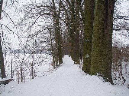 FOTKA - v zimě ......