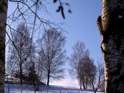 FOTKA - Lednová příroda
