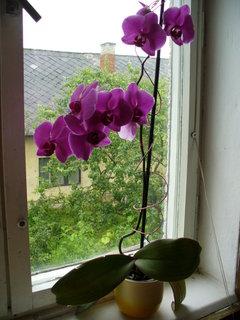 FOTKA - orchidea3