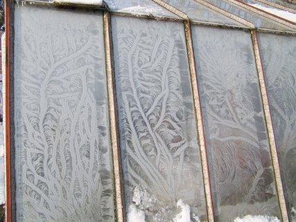 FOTKA - zamrzlý skleník
