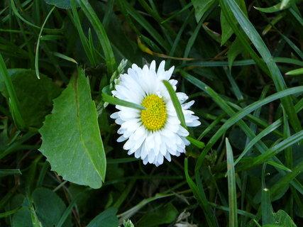 FOTKA - kvetinka