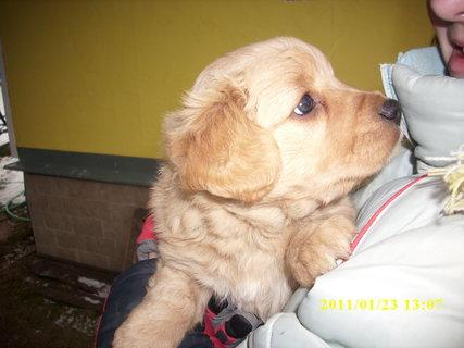 FOTKA - štěnátko-kluk 2