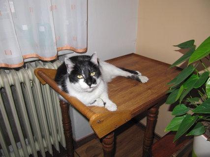 FOTKA - Servírovací stolek v obložení