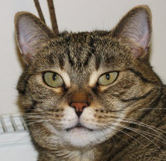 FOTKA - Kočka 1