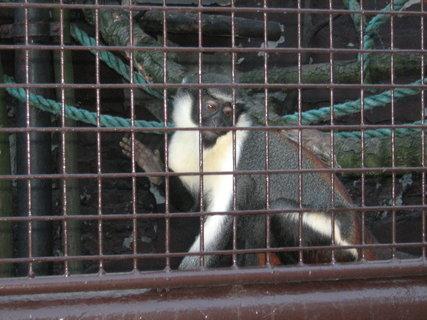 FOTKA - Opička