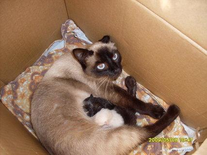 FOTKA - Číča s koťaty