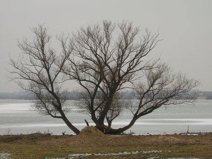 FOTKA - strom u rybníka Olešek