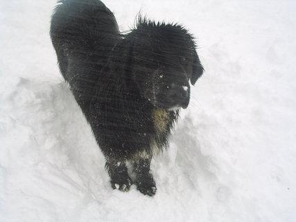 FOTKA - Ája miluje sníh 1