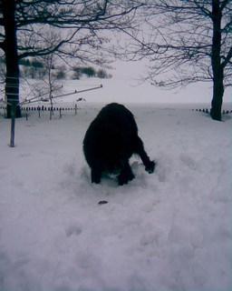 FOTKA - Ája miluje sníh 2