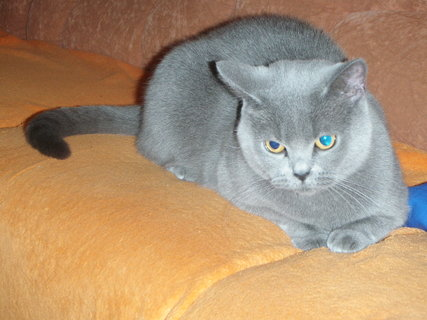 FOTKA - kočička 3