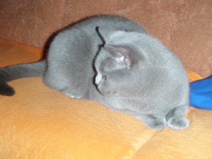 FOTKA - kočička 4