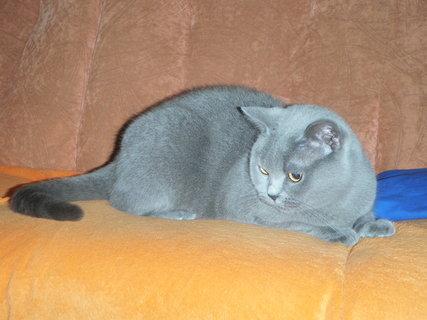 FOTKA - kočička 5