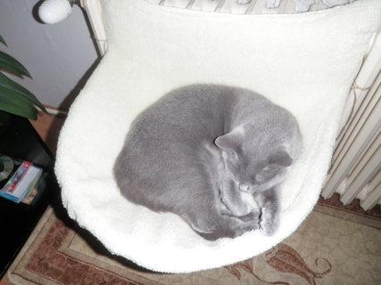 FOTKA - kočička 6
