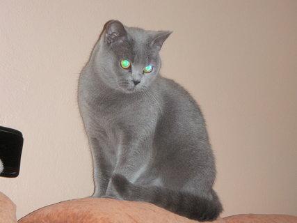 FOTKA - kočička 8
