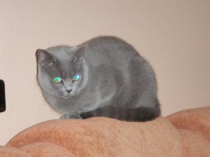 FOTKA - kočička 9