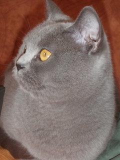 FOTKA - kočička 13