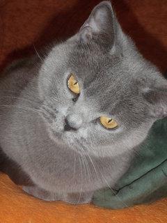 FOTKA - kočička 14
