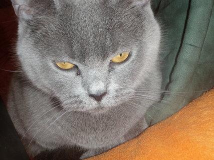 FOTKA - kočička 15