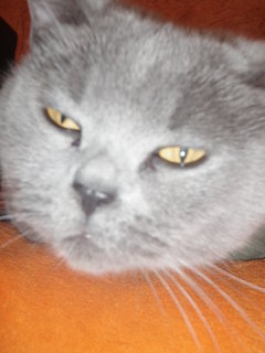 FOTKA - kočička 16